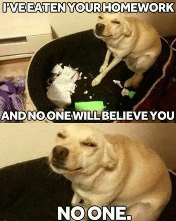 Dog - IVEEATENYOURHOMEWORK ANDNO ONEWILL BELIEVE YOU NO ONE.