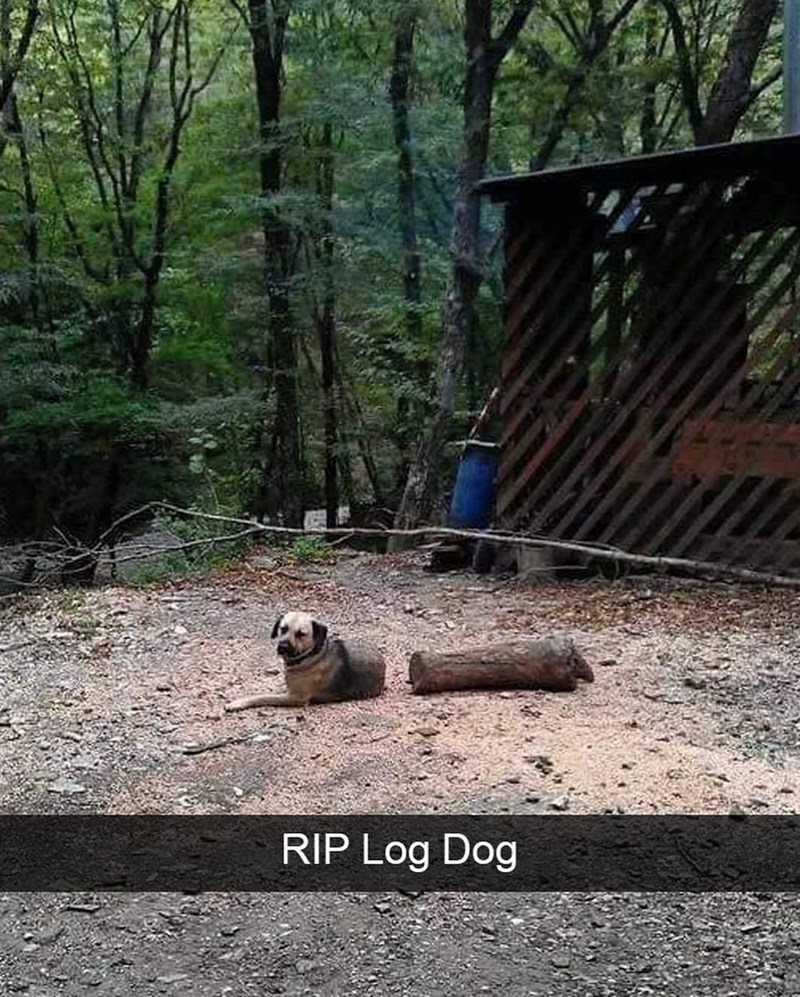 Nature - RIP Log Dog