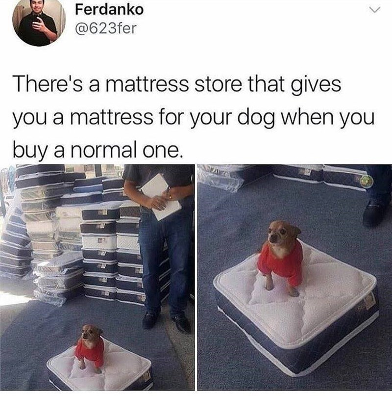 Font - Ferdanko @623fer There's a mattress store that gives you a mattress for your dog when you buy a normal one.