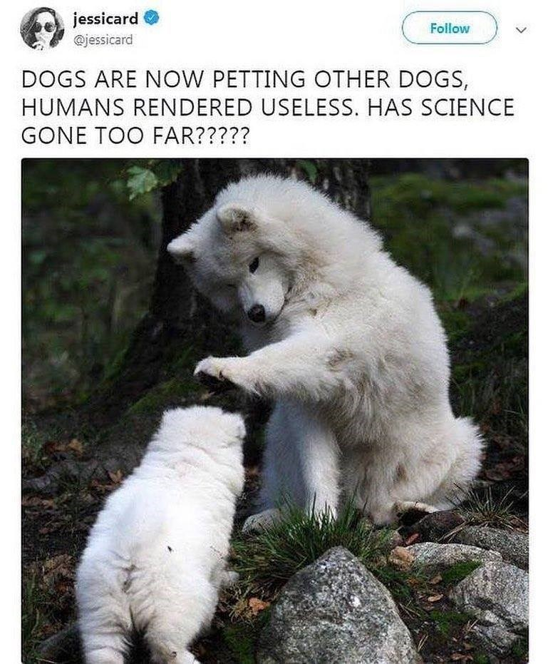 Canidae - jessicard Follow @jessicard DOGS ARE NOW PETTING OTHER DOGS, HUMANS RENDERED USELESS. HAS SCIENCE GONE TOO FAR?????