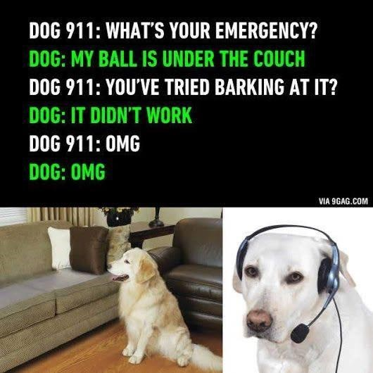 Dog - Dog breed - DOG 911: WHAT'S YOUR EMERGENCY? DOG: MY BALL IS UNDER THE COUCH DOG 911: YOU'VE TRIED BARKING AT IT? DOG: IT DIDN'T WORK DOG 911: OMG DOG: OMG VIA 9GAG.COM