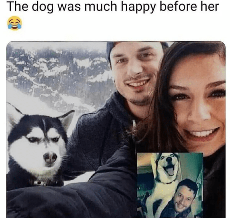 Dog - Siberian husky - The dog was much happy before her