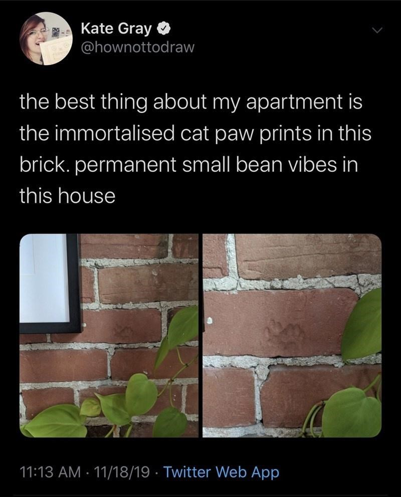 Text - Kate Gray @hownottodraw the best thing about my apartment is the immortalised cat paw prints in this brick. permanent small bean vibes in this house 11:13 AM · 11/18/19 · Twitter Web App