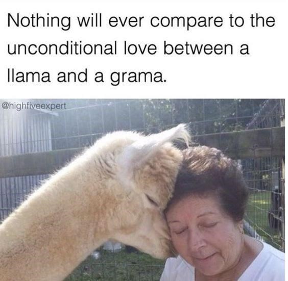 Horse - Nothing will ever compare to the unconditional love between a llama and a grama. @highfiveexpert