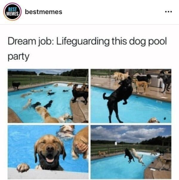 Water - BEST MEMES bestmemes ... Dream job: Lifeguarding this dog pool party