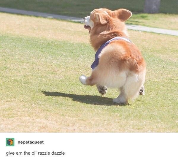 Dog - nepetaquest give em the ol' razzle dazzle