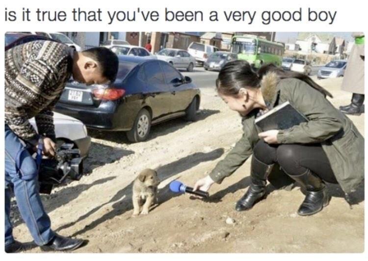 Vehicle door - is it true that you've been a very good boy