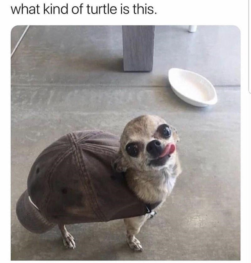 Snout - what kind of turtle is this.