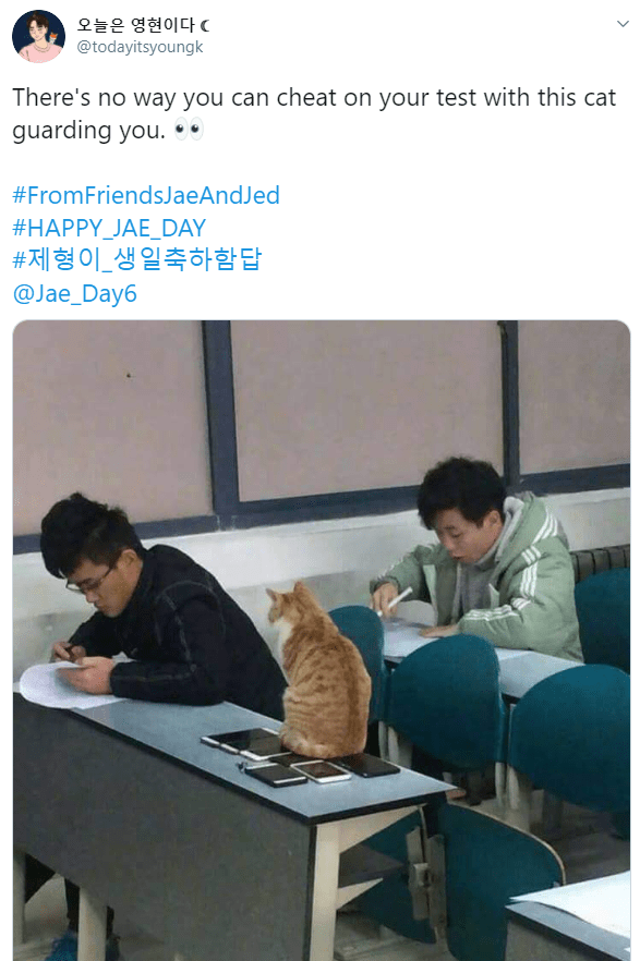 Job - 오늘은 영현이다C @todayitsyoungk There's no way you can cheat on your test with this cat guarding you. .. #FromFriendsJaeAndJed #HAPPY_JAE_DAY #제형이_생일축하함답 @Jae_Day6