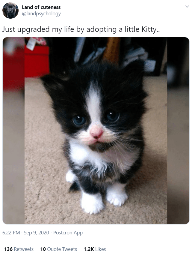 Cat - Land of cuteness @landpsychology Just upgraded my life by adopting a little Kitt.. 6:22 PM · Sep 9, 2020 · Postcron App 136 Retweets 10 Quote Tweets 1.2K Likes >
