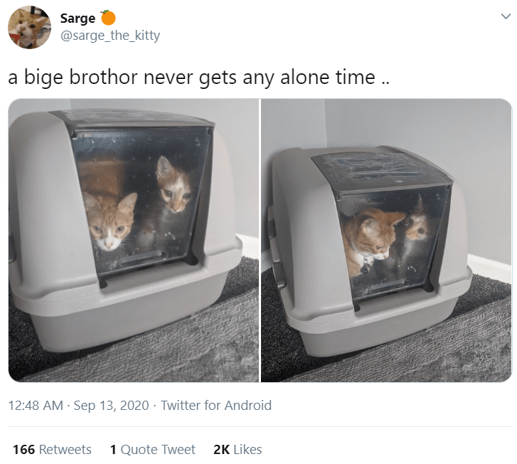 Product - Sarge @sarge_the_kitty a bige brothor never gets any alone time. 12:48 AM - Sep 13, 2020 · Twitter for Android 166 Retweets 1 Quote Tweet 2K Likes >