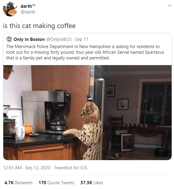 Property - darthM @darth is this cat making coffee O Only In Boston @OnlylnBOS · Sep 11 The Merrimack Police Department in New Hampshire is asking for residents to look out for a missing forty pound, four year old African Serval named Spartacus that is a family pet and legally owned and permitted. Cettes 12:55 AM - Sep 12, 2020 · Tweetbot for iOS 4.7K Retweets 170 Quote Tweets 37.3K Likes HOIR