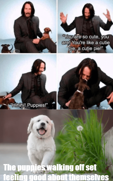 You are so cute,you like a cutie pie. cutie pie! Hihihi! Puppies! puppies walking offset feeling good about themselves Keanu Reeves dogs