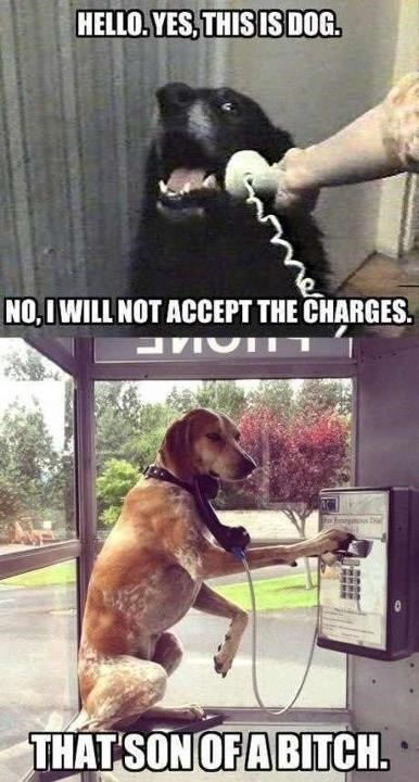 Vertebrate - HELLO. YES, THIS IS DOG. NO, I WILL NOT ACCEPT THE CHARGES. THAT SON OF A BITCH.