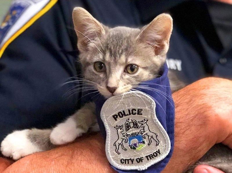 cats working as police officers