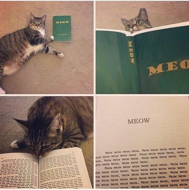 Cat - MEOW MEO МEOW Meow meow neow meow. Meow meow meow meow meow, eOw meow meow meow meow. Meow meow meow meow, meow teow. Meow meow meow meow. Meow meow meow meow. Meow eow meow meow, meow meow meow. Meow meow meow meow meow meow meow. MeoW meow eow meow meow meow. Meow meow meow meow meoW meow POW meow meow, meow meow meow meow meow. Meow meoW Ow meow meow meow meow meow meow meow. Meow meow OW meow meow meow meow. Meow meow meow, meow meOW A MANM. Meow meOW meow meow meow meow MEOW