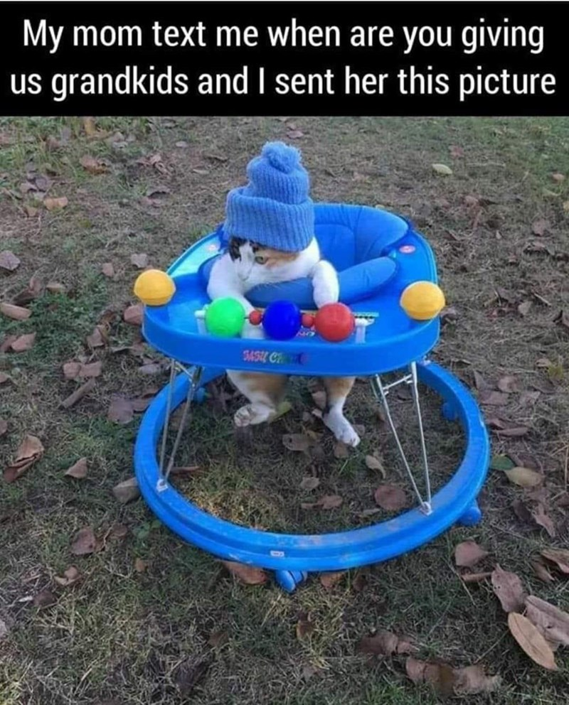 Play - My mom text me when are you giving us grandkids and sent her this picture 5454 C