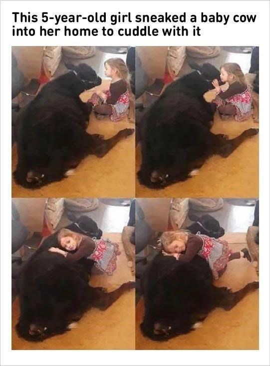 Black hair - This 5-year-old girl sneaked a baby cow into her home to cuddle with it