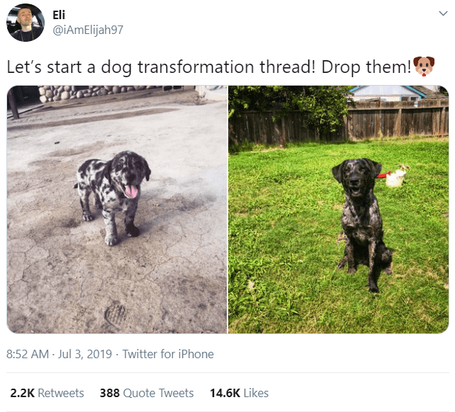 Dog - Eli @iAmElijah97 Let's start a dog transformation thread! Drop them! 8:52 AM Jul 3, 2019 · Twitter for iPhone 2.2K Retweets 388 Quote Tweets 14.6K Likes