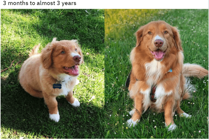 Dog - 3 months to almost 3 years