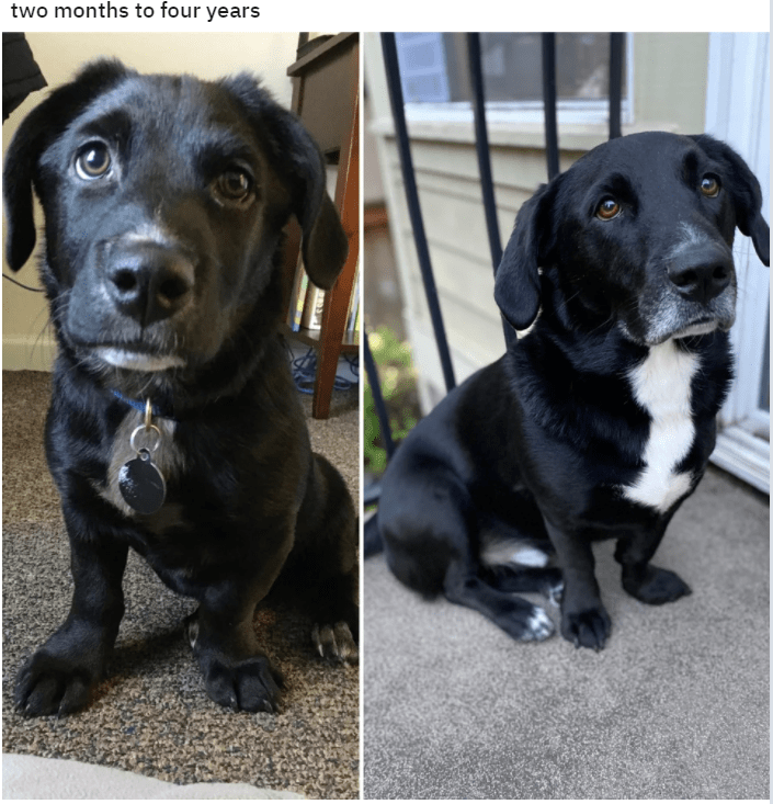 Dog - two months to four years ALL