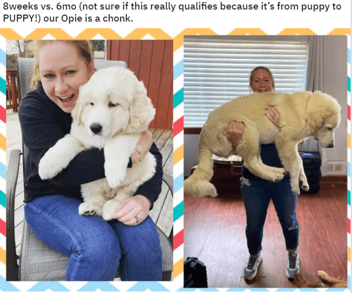 Dog - 8weeks vs. 6mo (not sure if this really qualifies because it's from puppy to PUPPY!) our Opie is a chonk.