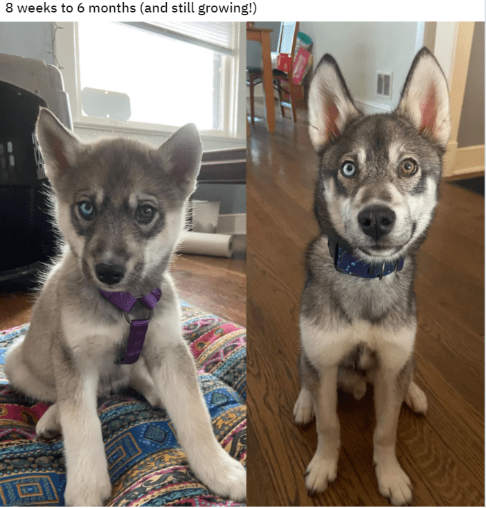 Dog - 8 weeks to 6 months (and still growing!) 700