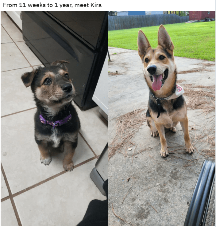 Dog - From 11 weeks to 1 year, meet Kira