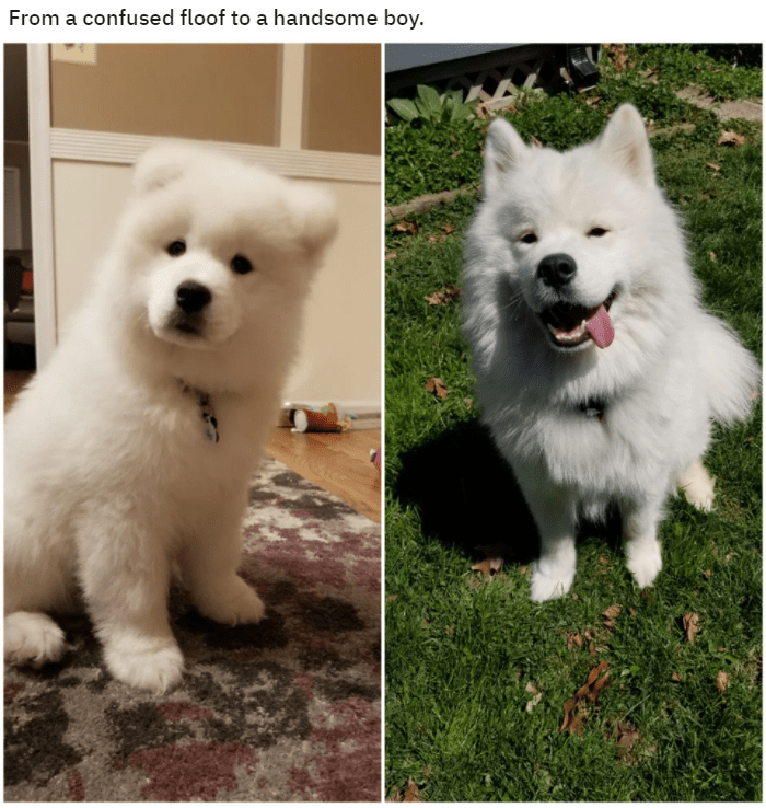 Dog - From a confused floof to a handsome boy.