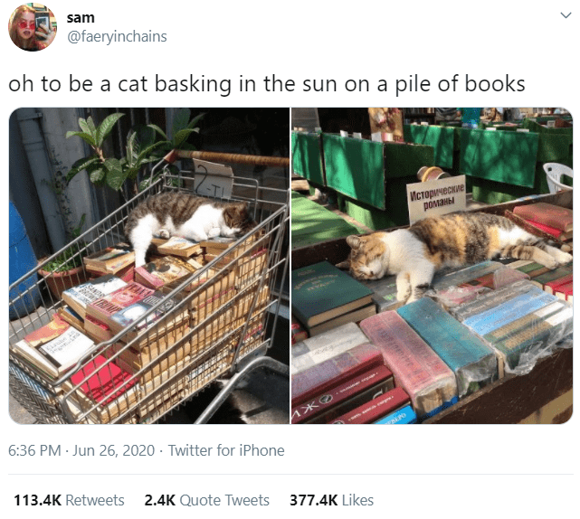 Product - sam @faeryinchains oh to be a cat basking in the sun on a pile of books TL Исторические романы त 6:36 PM · Jun 26, 2020 · Twitter for iPhone REPO 113.4K Retweets 2.4K Quote Tweets 377.4K Likes