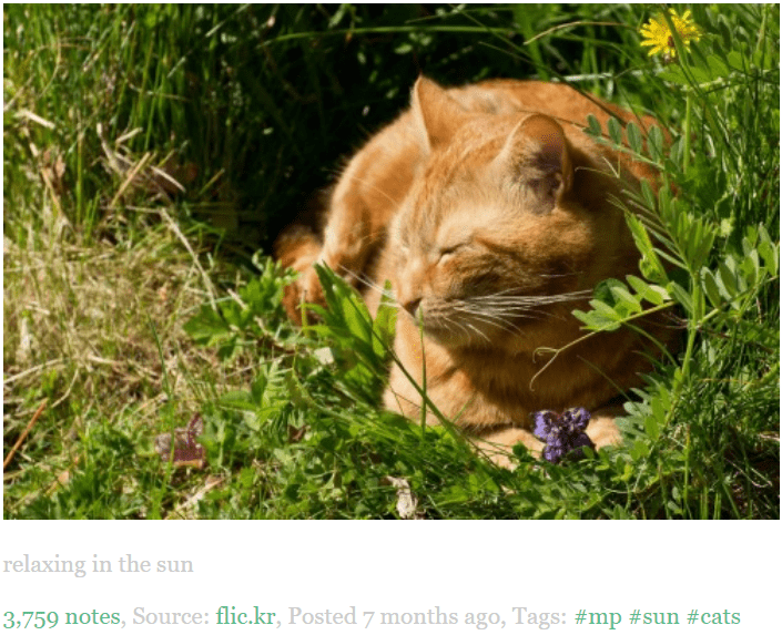 Cat - relaxing in the sun 3,759 notes, Source: flic.kr, Posted 7 months ago, Tags: #mp #sun #cats
