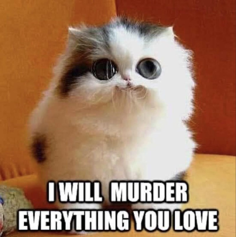 Cat - I WILL MURDER EVERYTHING YOU LOVE