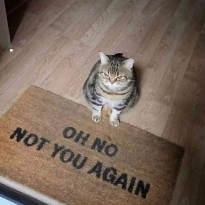 Cat - ОH NO NOT YOU AGAIN