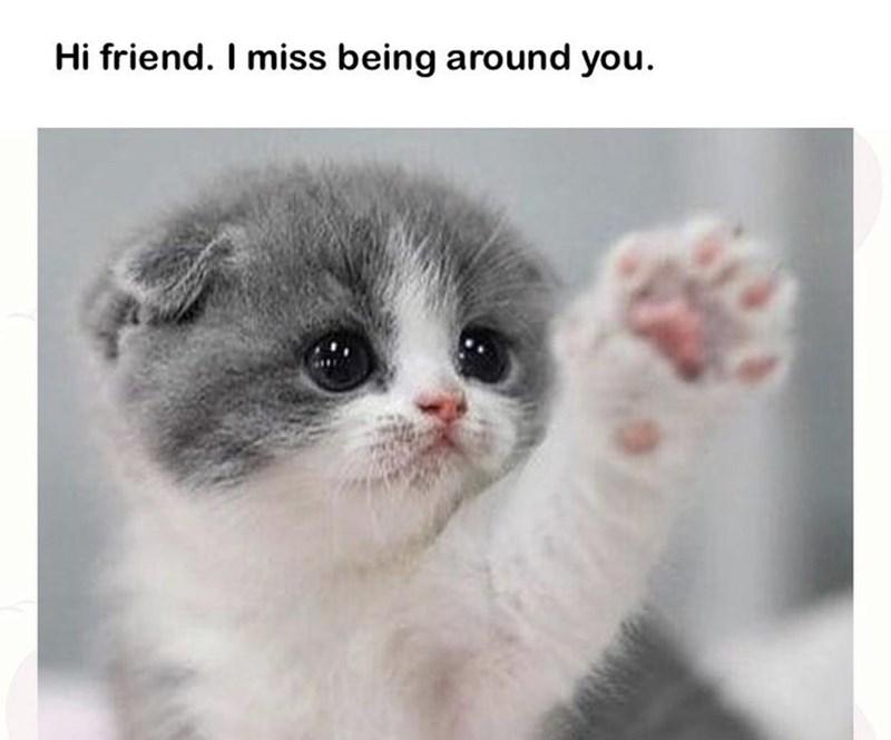 Cat - Hi friend. I miss being around you.