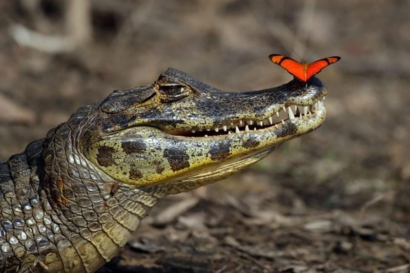 Reptile - 餅