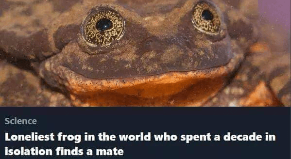 Toad - Science Loneliest frog in the world who spent a decade in isolation finds a mate