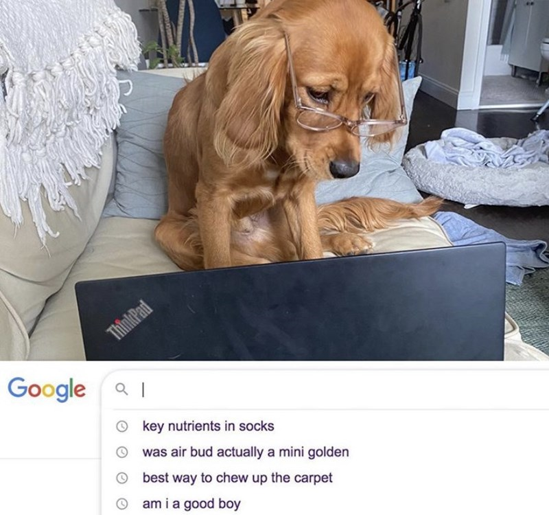 Dog - ThinkPad Google aI O key nutrients in socks was air bud actually a mini golden best way to chew up the carpet am i a good boy