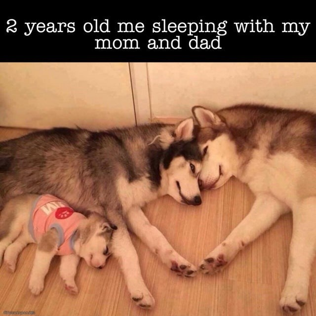Mammal - 2 years old me sleeping with my mom and dad