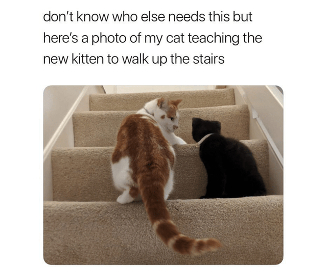 Cat - don't know who else needs this but here's a photo of my cat teaching the new kitten to walk up the stairs