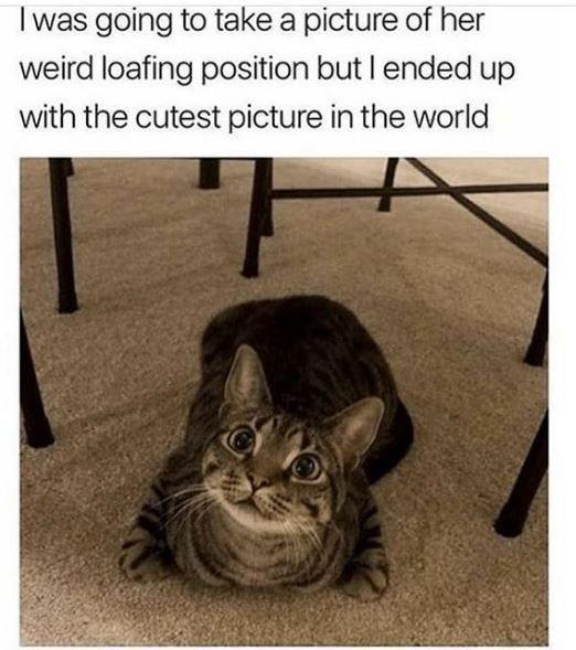 aww Cats - 9551230976
