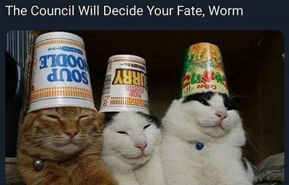 cat memes - 9551233536