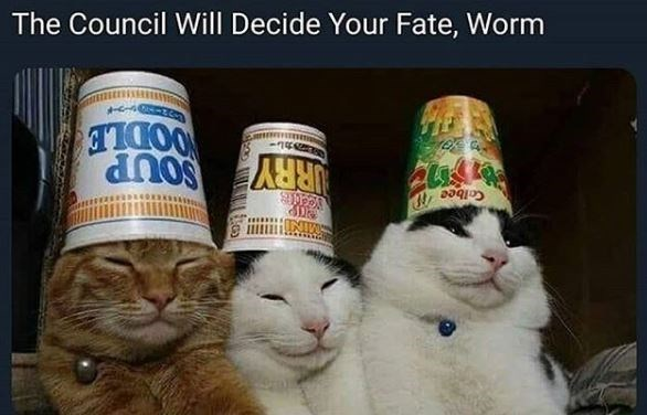 The Council Will Decide Your Fate, Worm three cats wearing noodle cups like hats