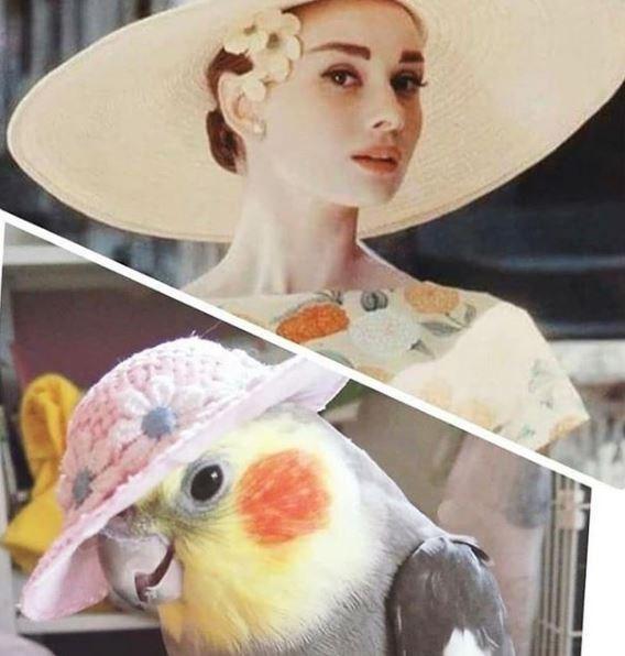 Audrey Hepburn classy old Hollywood movie star and a cute bird birb in an elegant hat