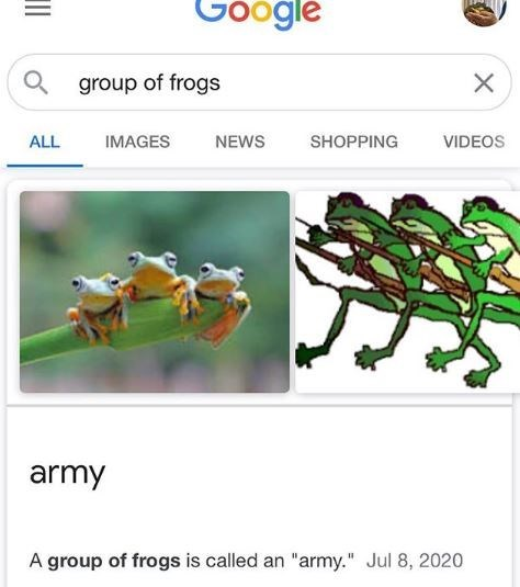 """Organism - Google group of frogs ALL IMAGES NEWS SHOPPING VIDEOS army A group of frogs is called an """"army."""" Jul 8, 2020 II"""