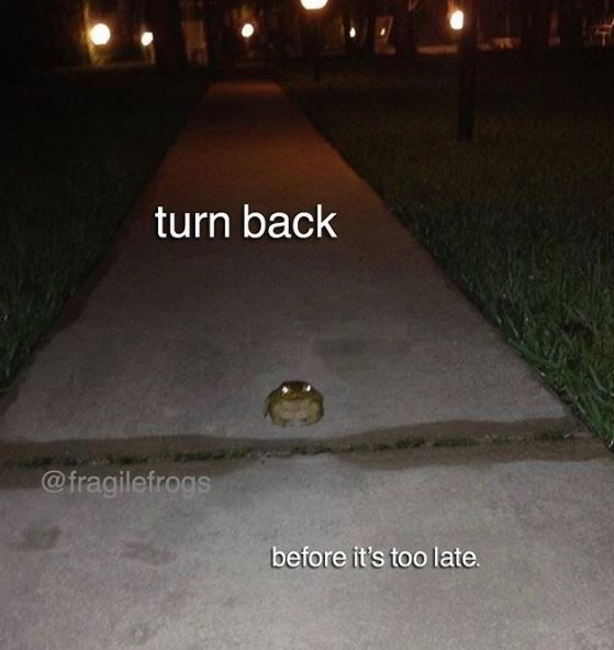 Lighting - turn back @fragilefrogs before it's too late.