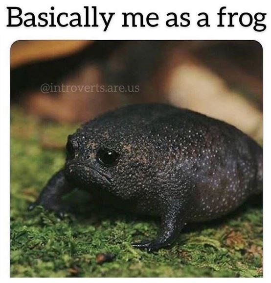 Terrestrial animal - Basically me as a frog @introverts.are.us