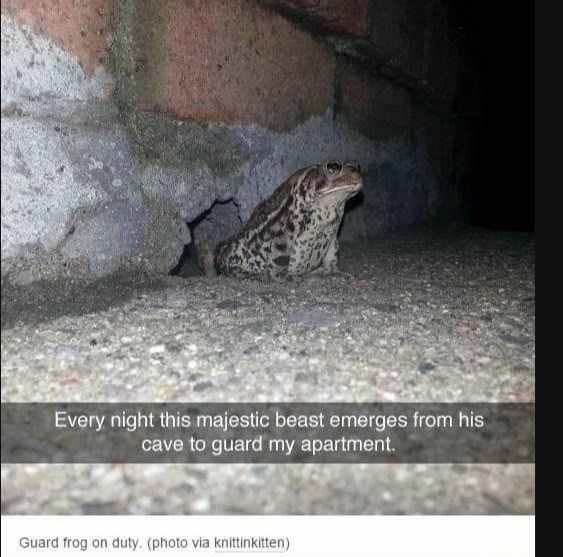 Adaptation - Every night this majestic beast emerges from his cave to guard my apartment. Guard frog on duty. (photo via knittinkitten)