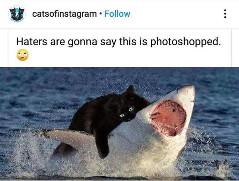 Cats - 9551272192