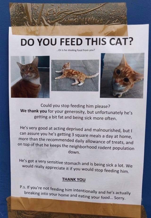 Cats - 9551273216