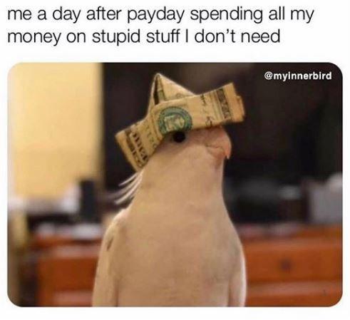 bird memes - 9551274752